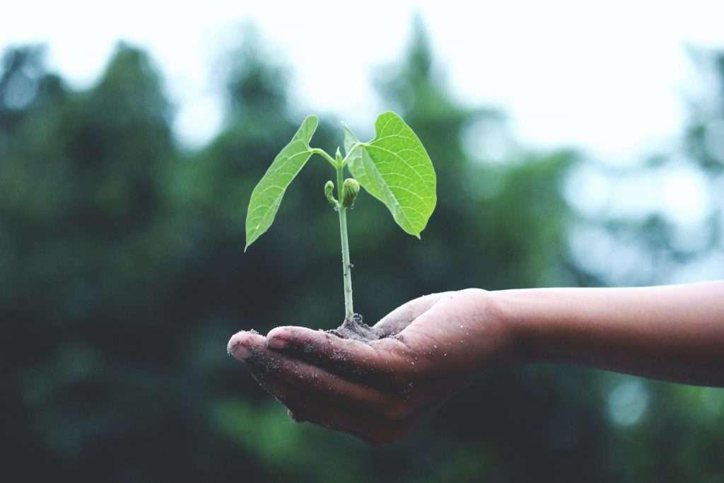 sembrar y cosechar sow and reap seminare e raccogliere